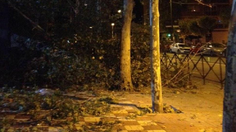 El viento ha provocado la caía de varios árboles en Granada capital. Foto: Pilar Arjona